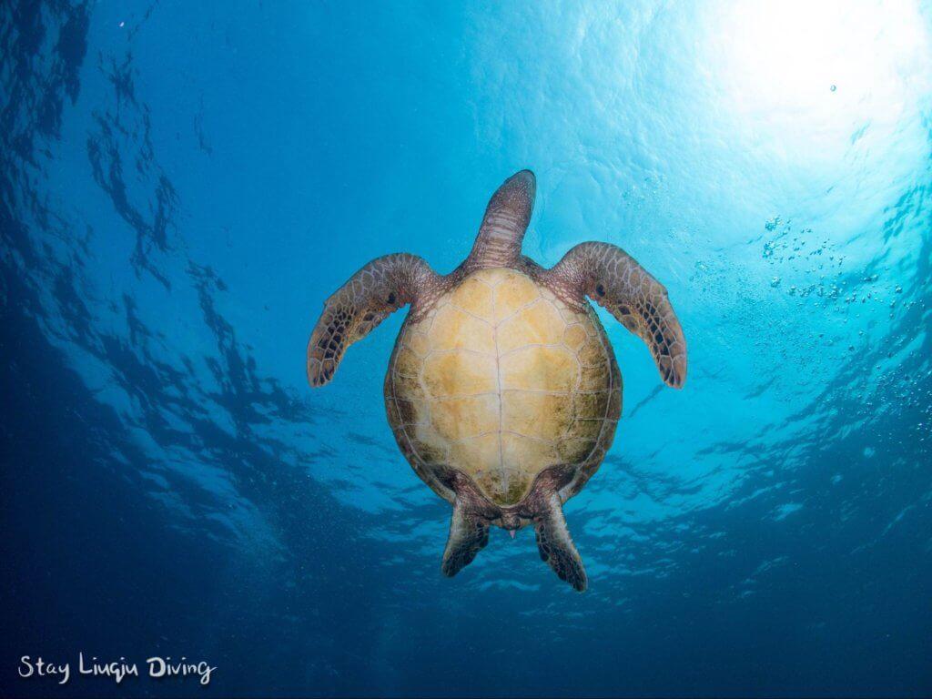 體驗潛水小琉球
