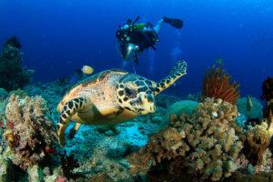 學習水肺潛水探索海底世界
